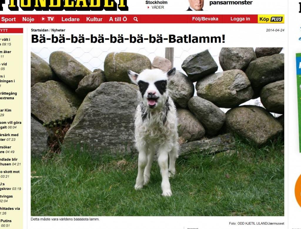 Batlamm